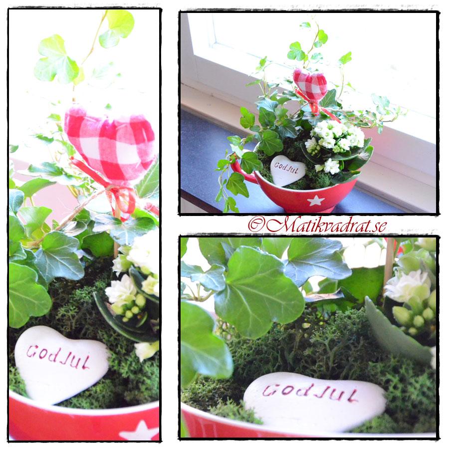 plantering-i-jumbokopp-copy