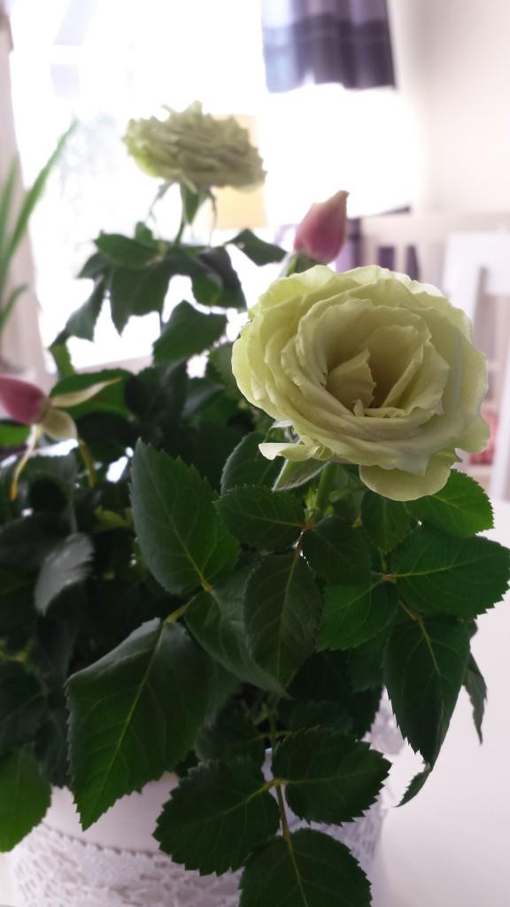 grön ros