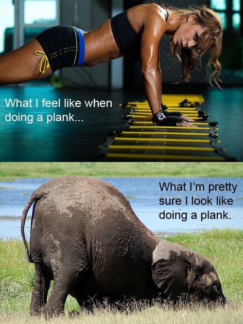 plankan som en elefant